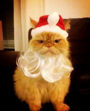 Via @AdamLambertHelpNice Photo Tweeted by Saana Koskinen @MissSaana (Sauli's sister): Merry Christmas everybody ♥ pic.twitter.com/RnihXoNa Awwwww!