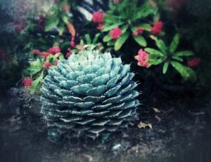 Sauli-Cactus