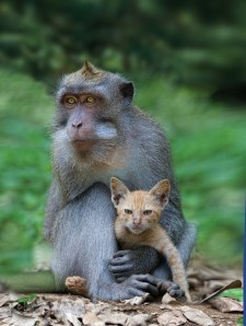 From Washington Post article on Unlikely Mothers: Adoptions among Animals